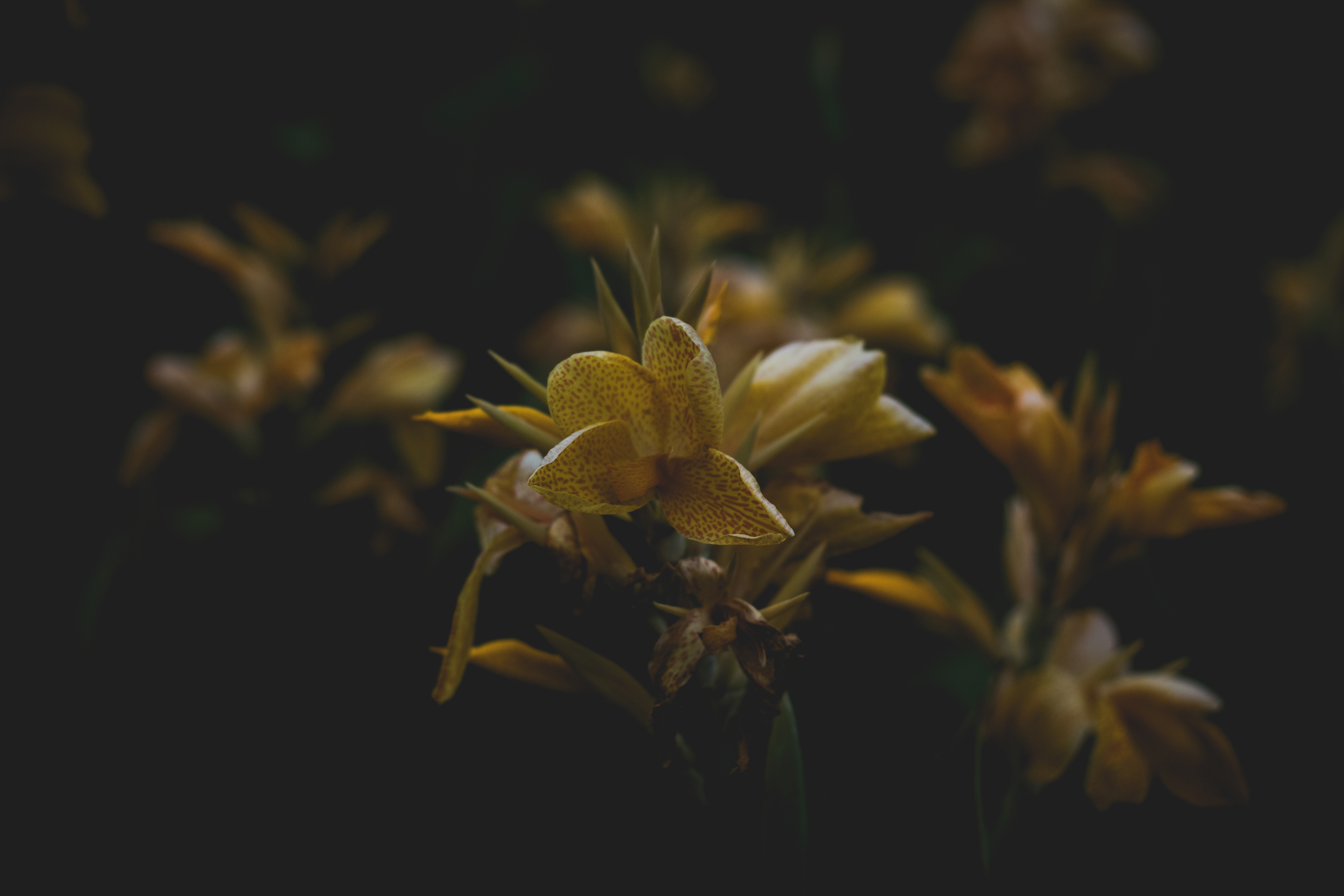 Moody Botanicals17.jpg