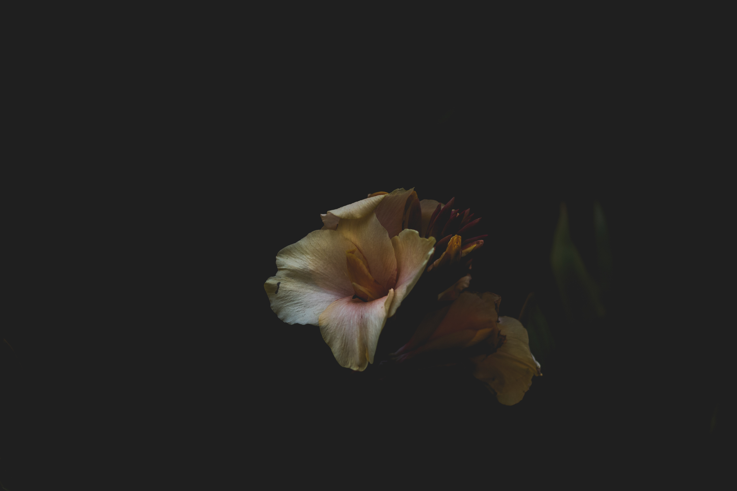 Moody Botanicals7.jpg
