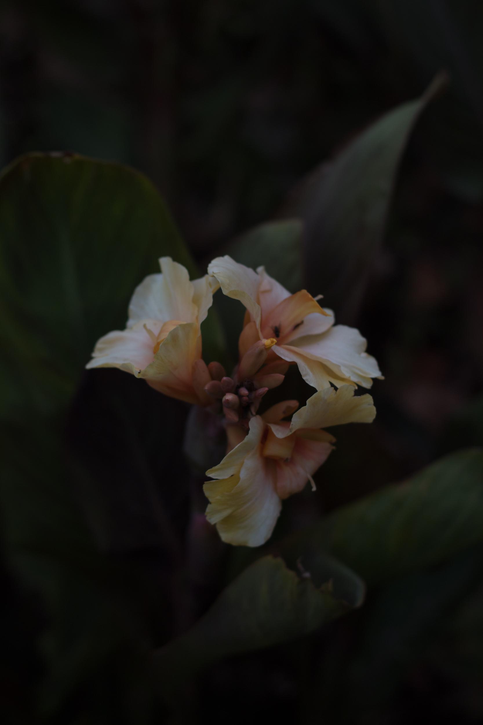 unedited-botanical-shot