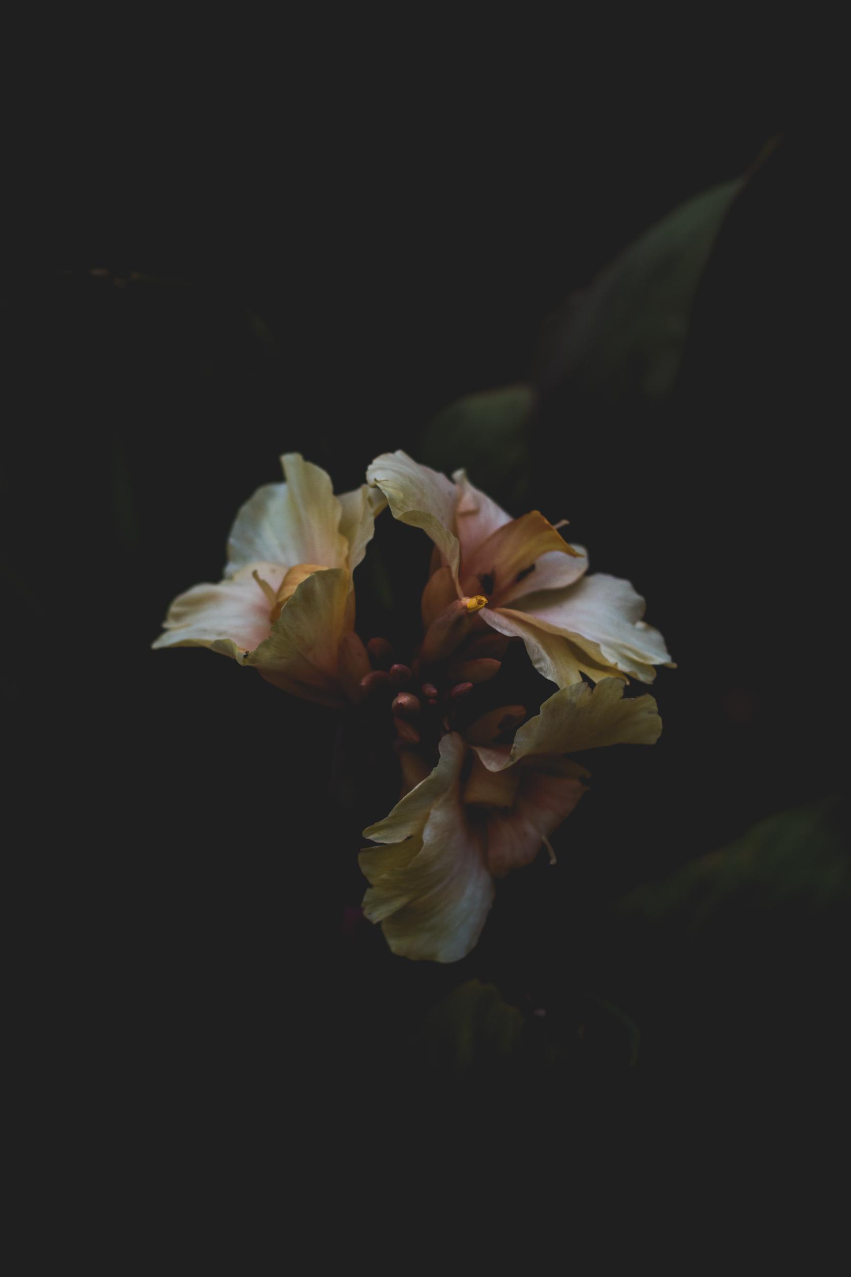 after-botanical-shot