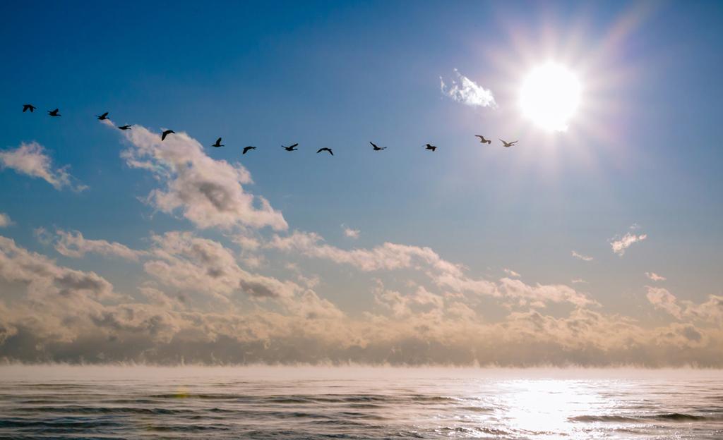 RobertLeaper_1_Early Morning Flight.jpg