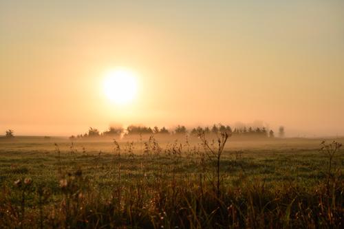 Jerome Maggiore-Morning Sonata_2.jpg