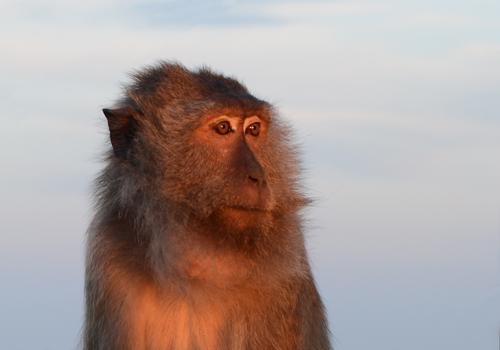 Jerome Maggiore-primal contemplation.jpg