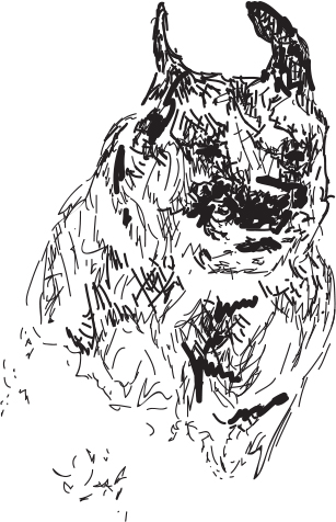 Jasper_sketch.jpg