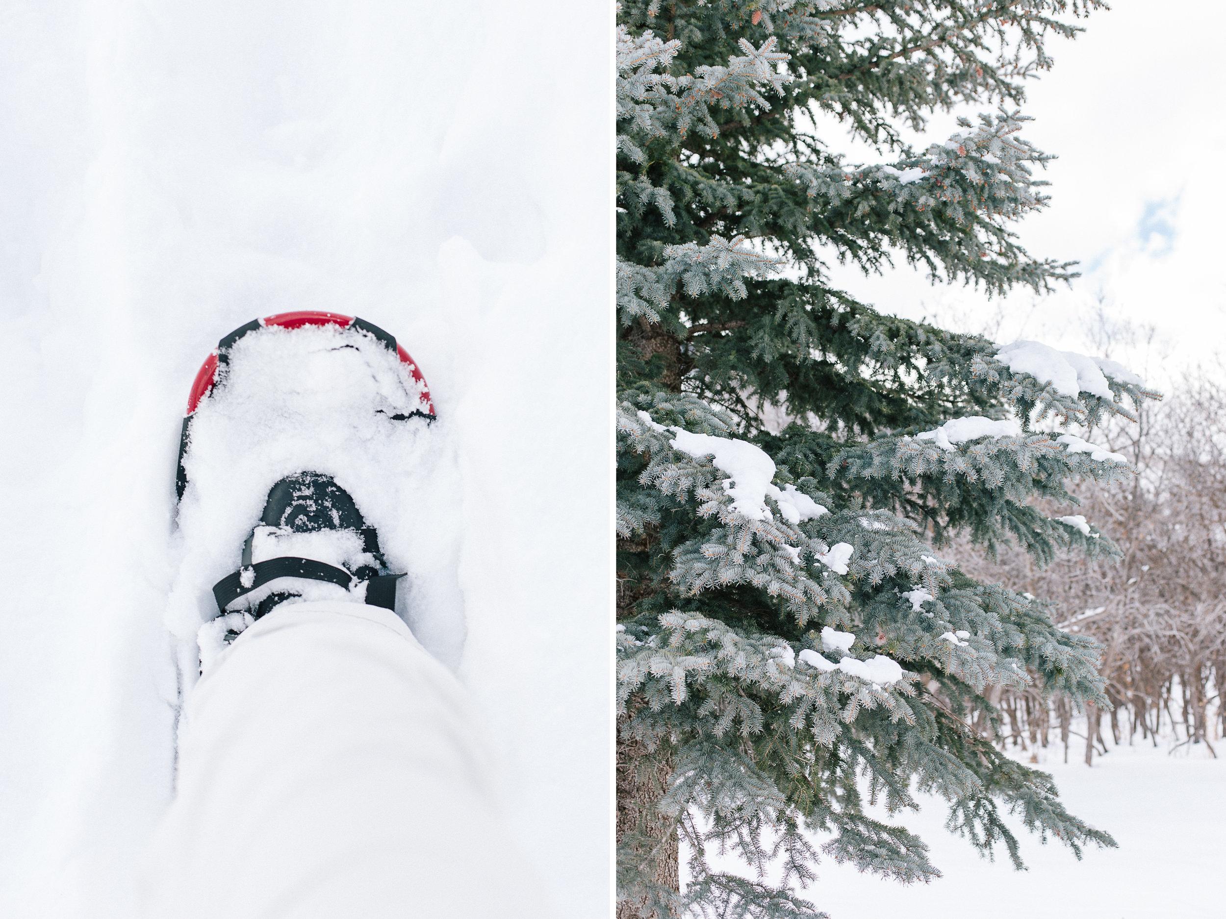 daidrismythephotography_snowshoeing_25.jpg