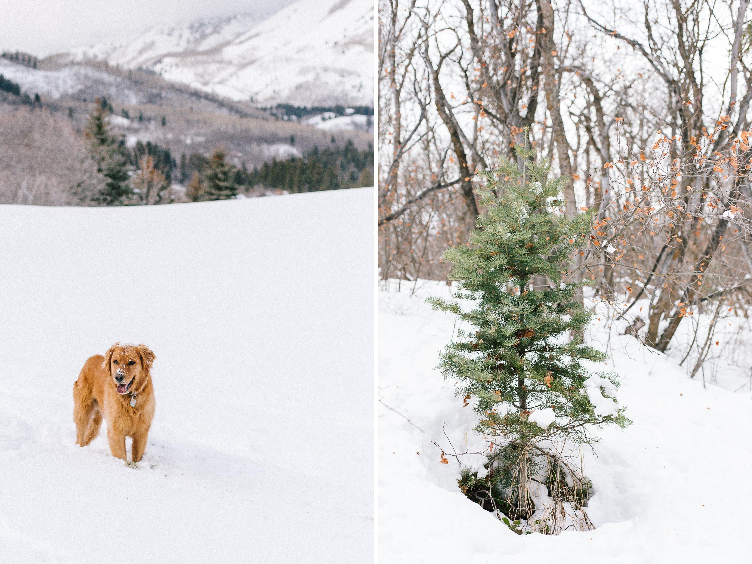 daidrismythephotography_snowshoeing_32.jpg