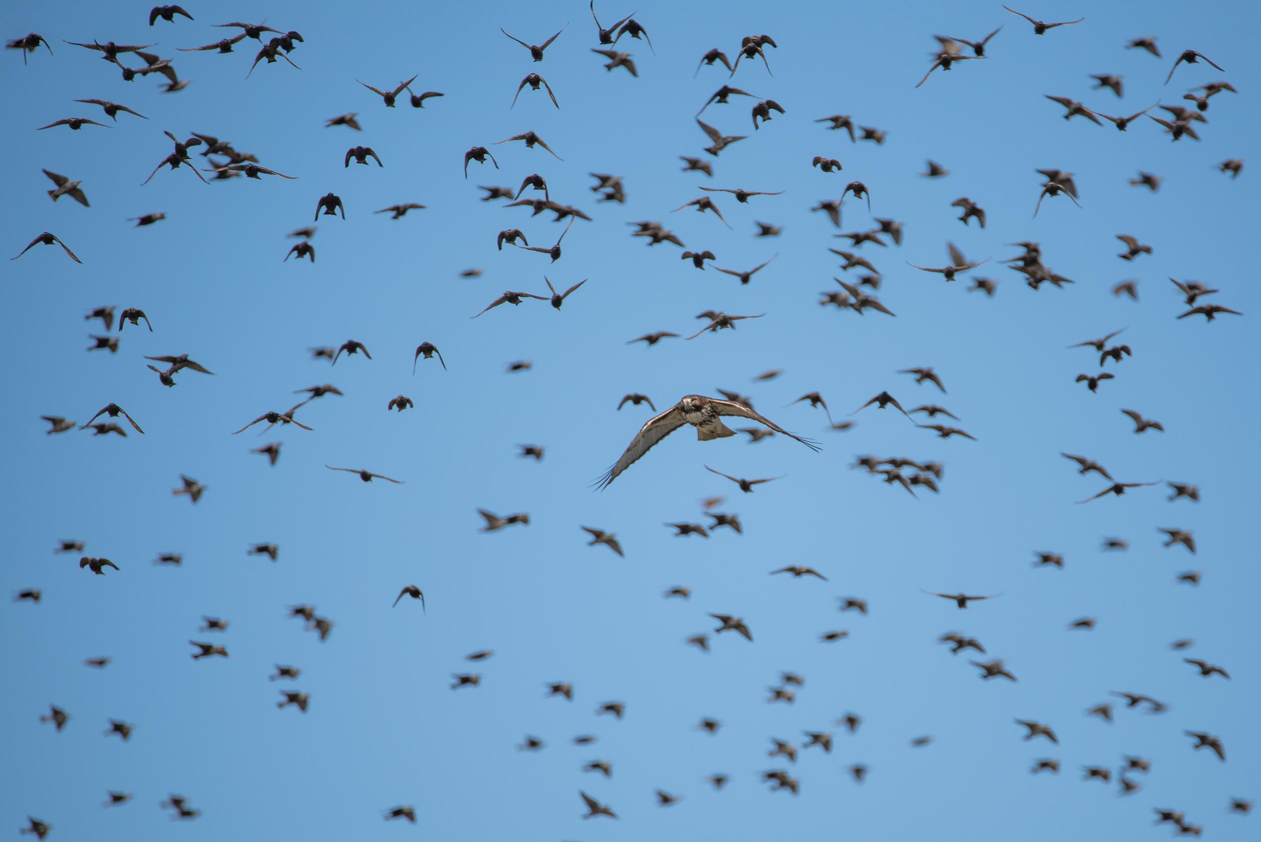The Birds  Nikon D750 600mm f/6.3 1/1600 sec.