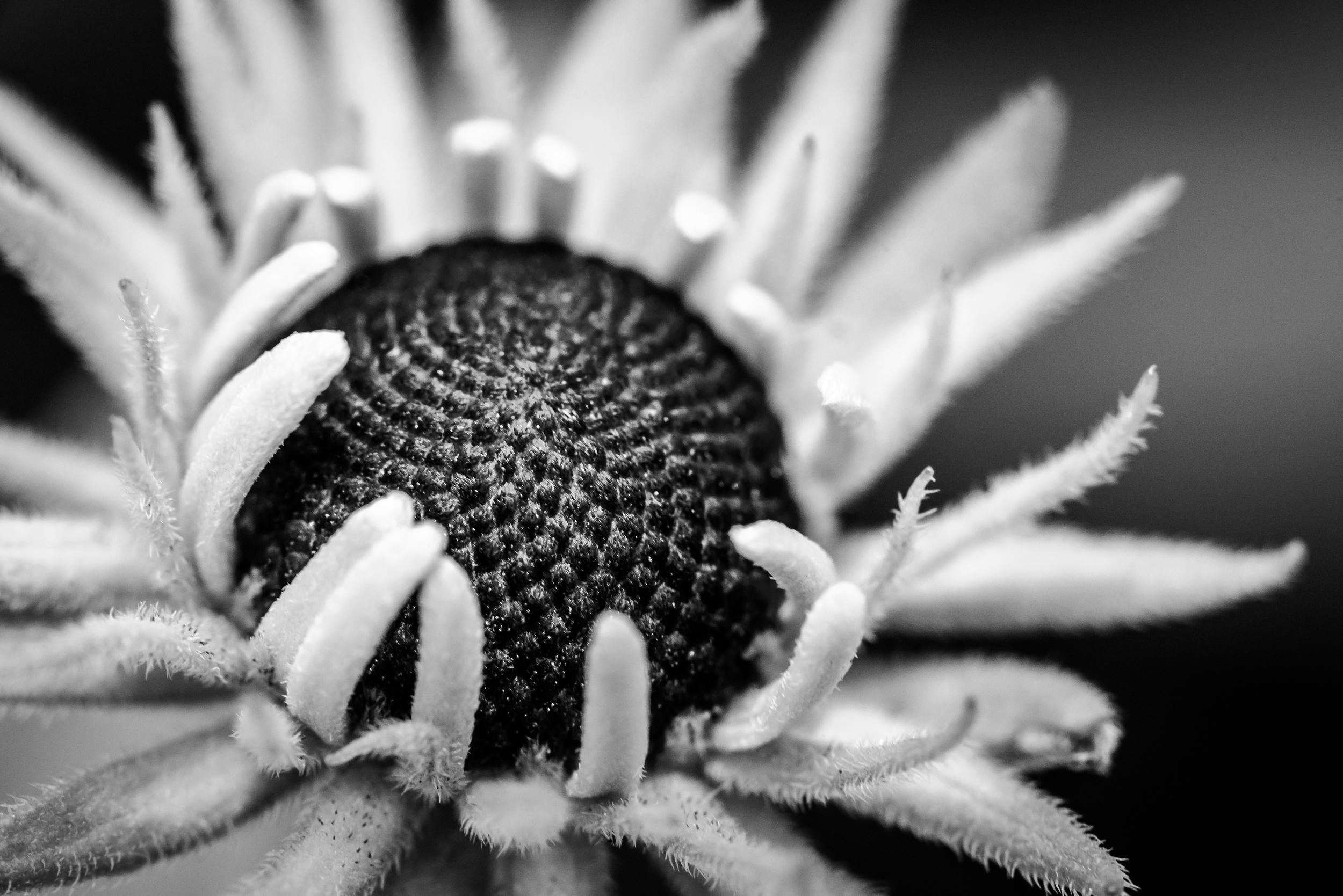 Jeremy Mudd - Yet to Bloom