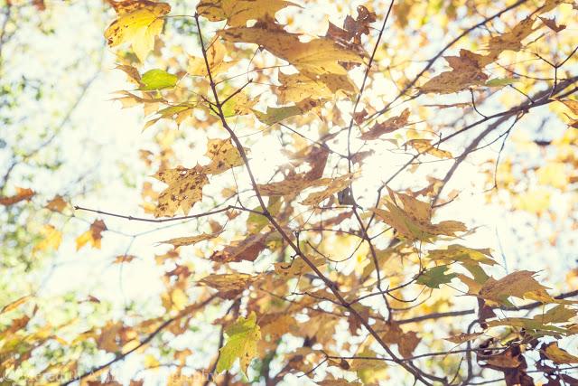 Meredith Skeens - Leaves