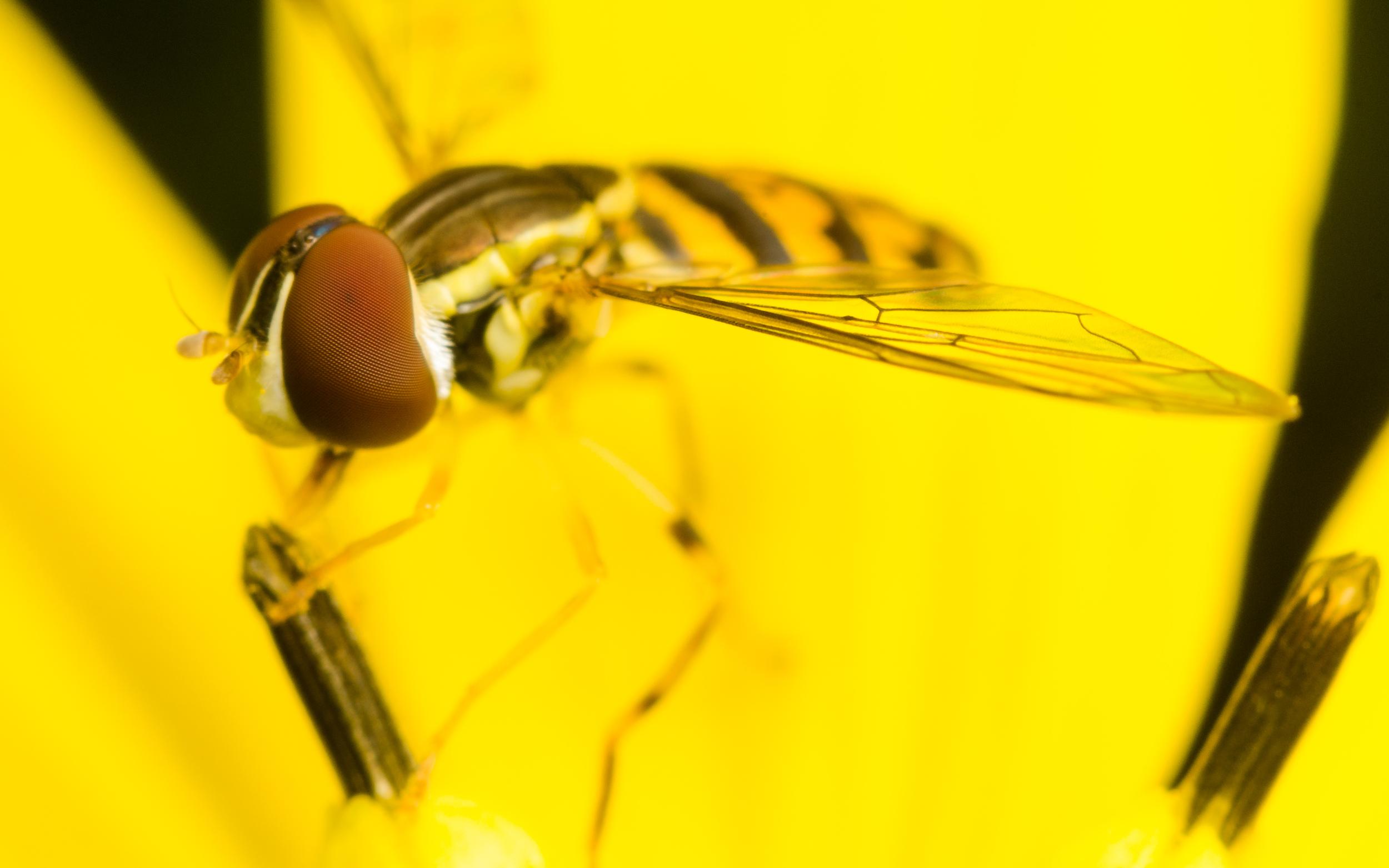 Hoverfly Nº 3