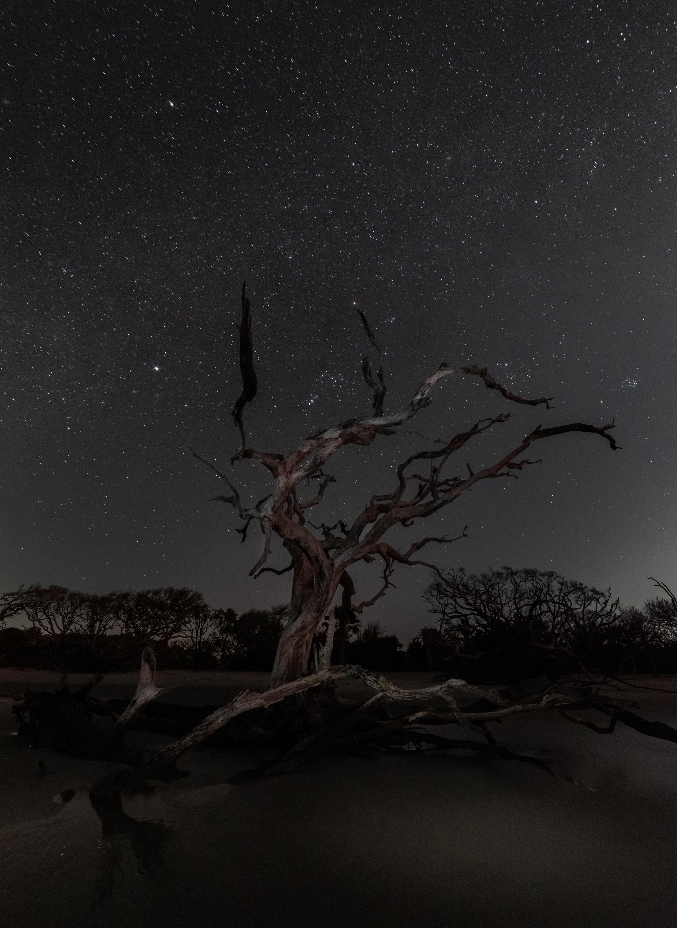 Driftwood Beach & Orion