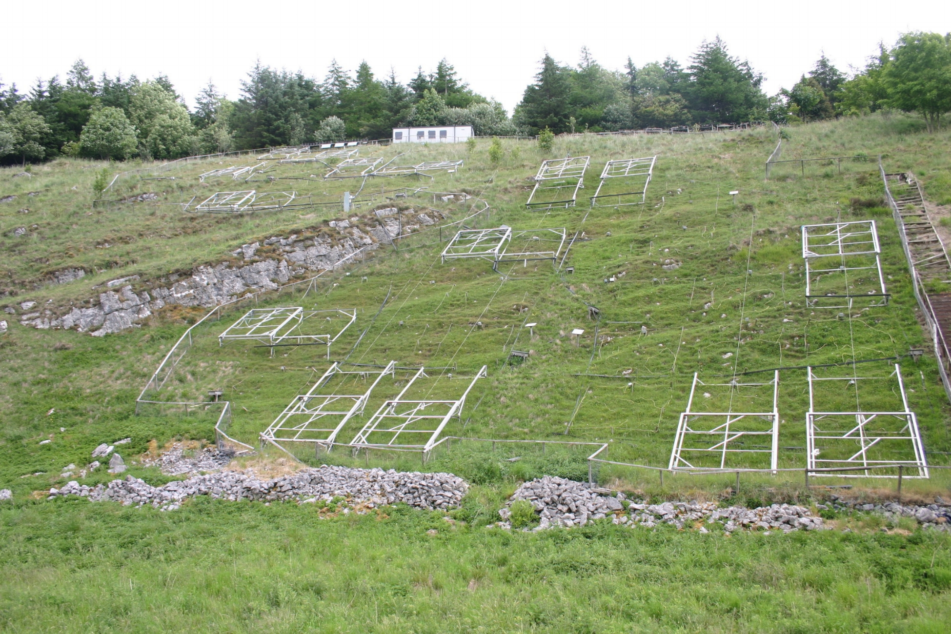 panorama of all plots, without rain covers