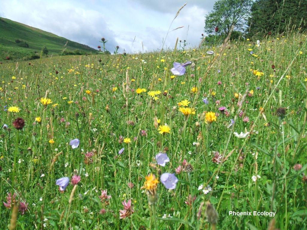 M Hayes 4 Close up Elan meadow (002).jpg