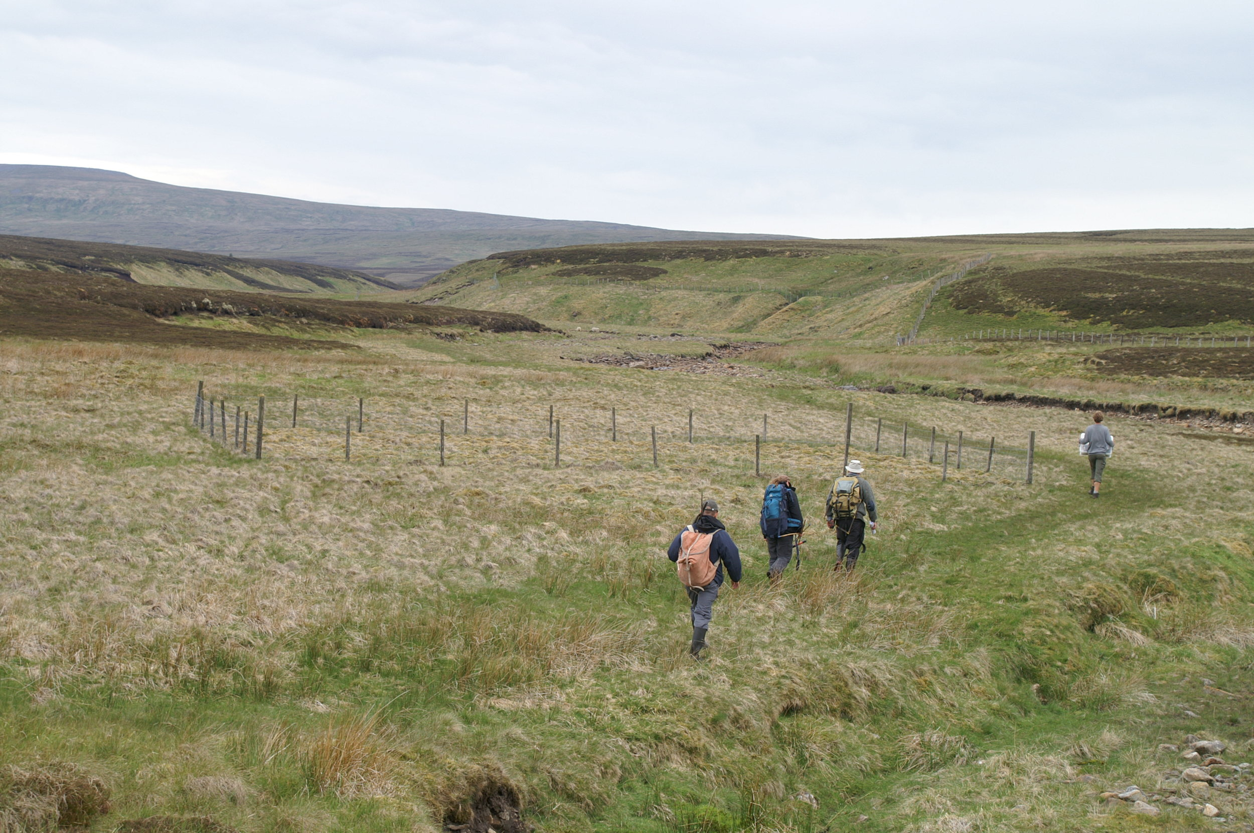 rewilding plot (grazing exclusion) at the moor house lte, northern pennines