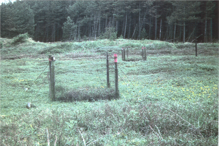 rabbit grazing exclosure in 1984