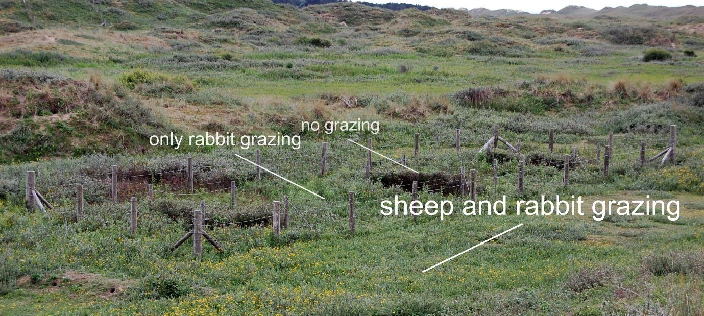 plot exclosure showing the three grazing 'treatments'
