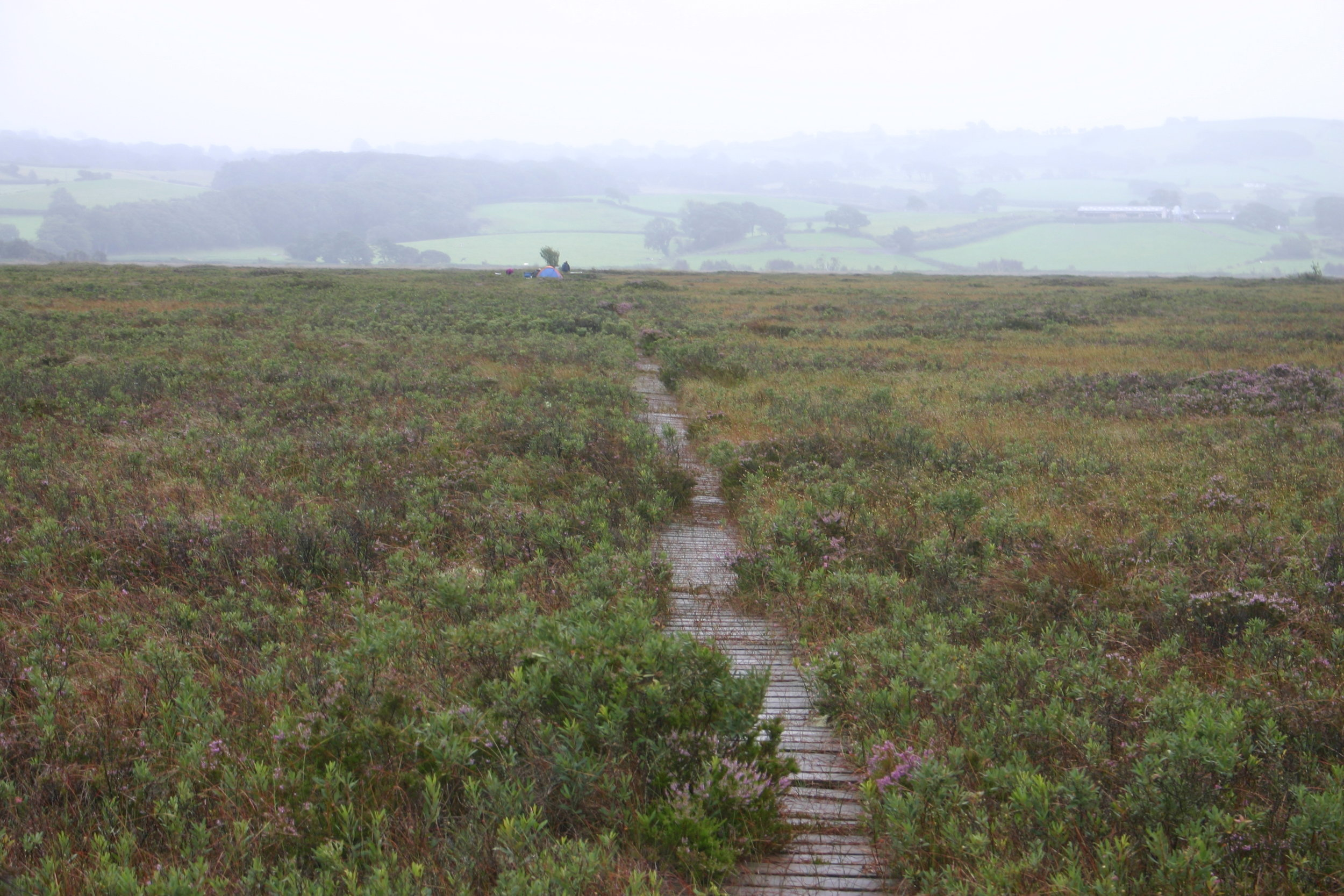 panorama of the rare raised bog habitat at cors fochno in mid-wales