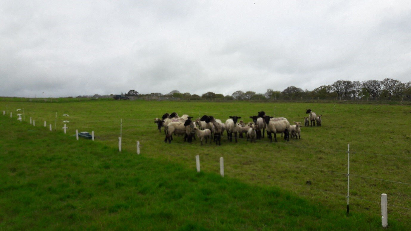 example of a controlled cell-grazing plot