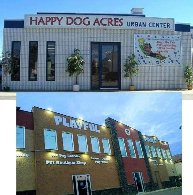 Happy Dog Acres -> renovations -> Playful Paws