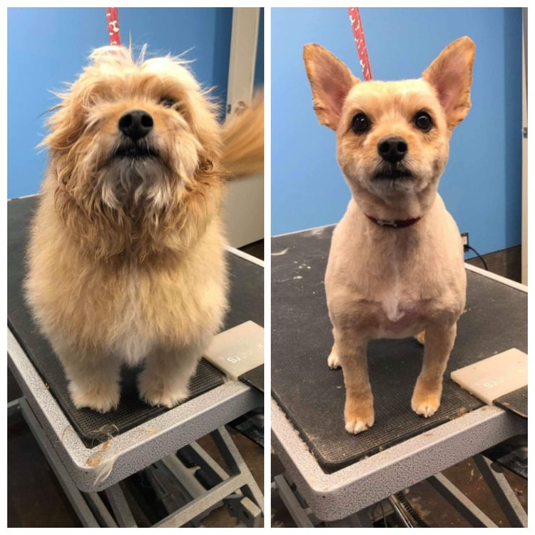 Grooming Services — Playful Paws Saskatoon | Dog Kennels