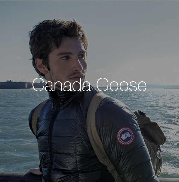canada goose3.jpg