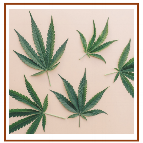 Cannibas + Women's Health (1).png