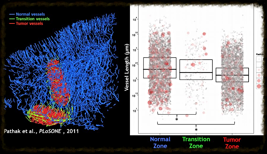 Visualization of blood vessel segments (> 20,000) in the mouse brain [ Link to paper ].