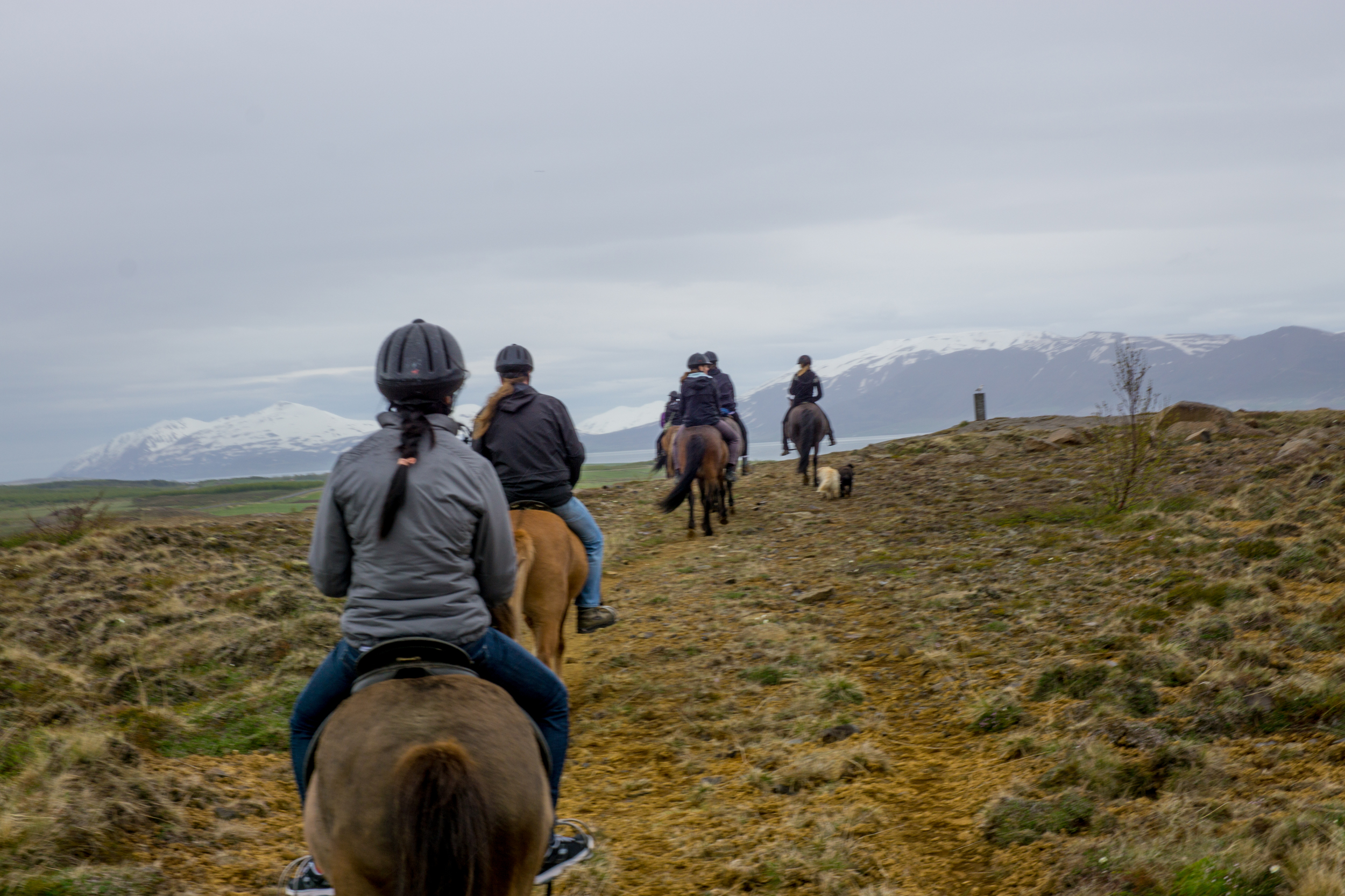 Horseback riding - Akuryeri, Iceland