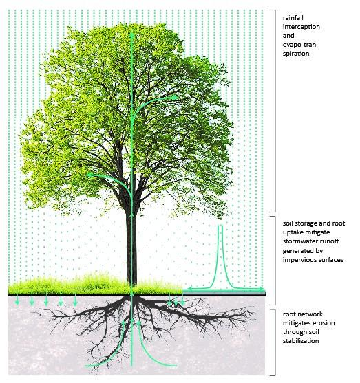 stormwater management.jpg