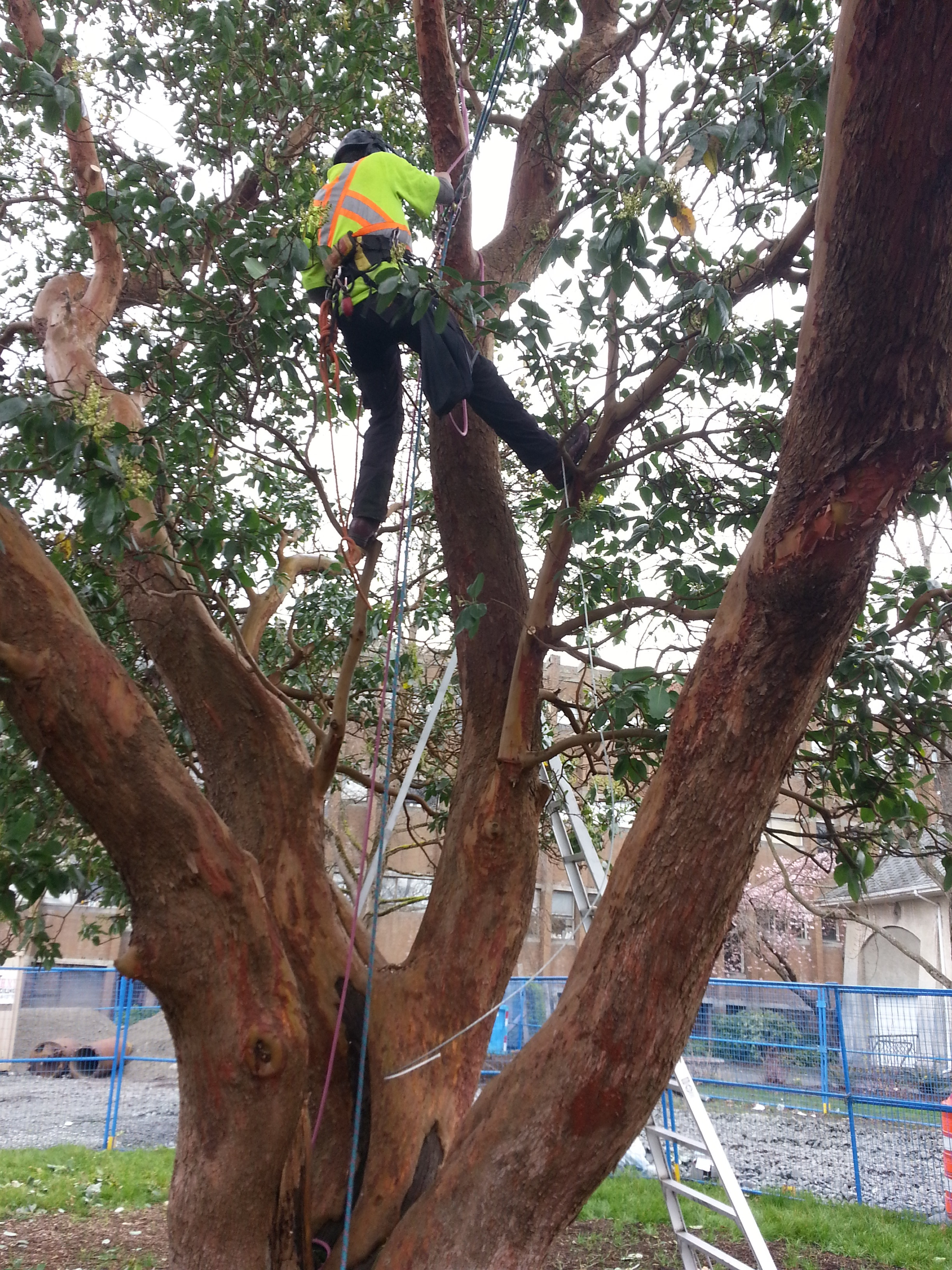 10. Tree Care Services.jpg