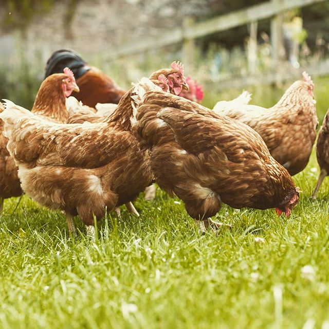 A happier, healthier animal makes a superior product, FACT.  That's why we only use free range and organic poultry from the West Coast of Wales or near the Norfolk Broads in our bars.  Do you know the benefits of eating Free Range VS Conventional Eggs?! No?! Pop over to ForiHQ on Facebook to find out more.