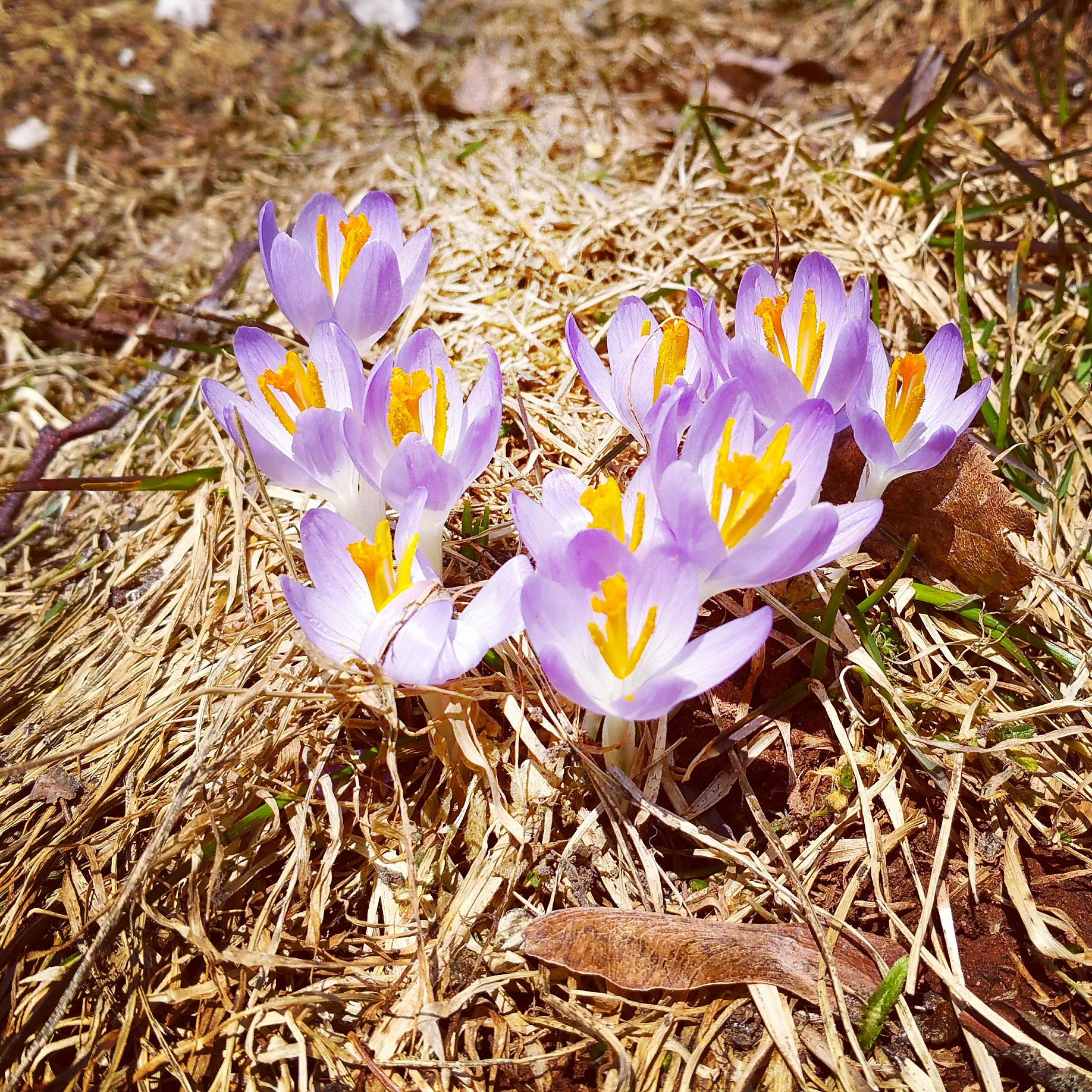 my sweet husband took a photo of these in our front yard and texted it to me...made my day :)