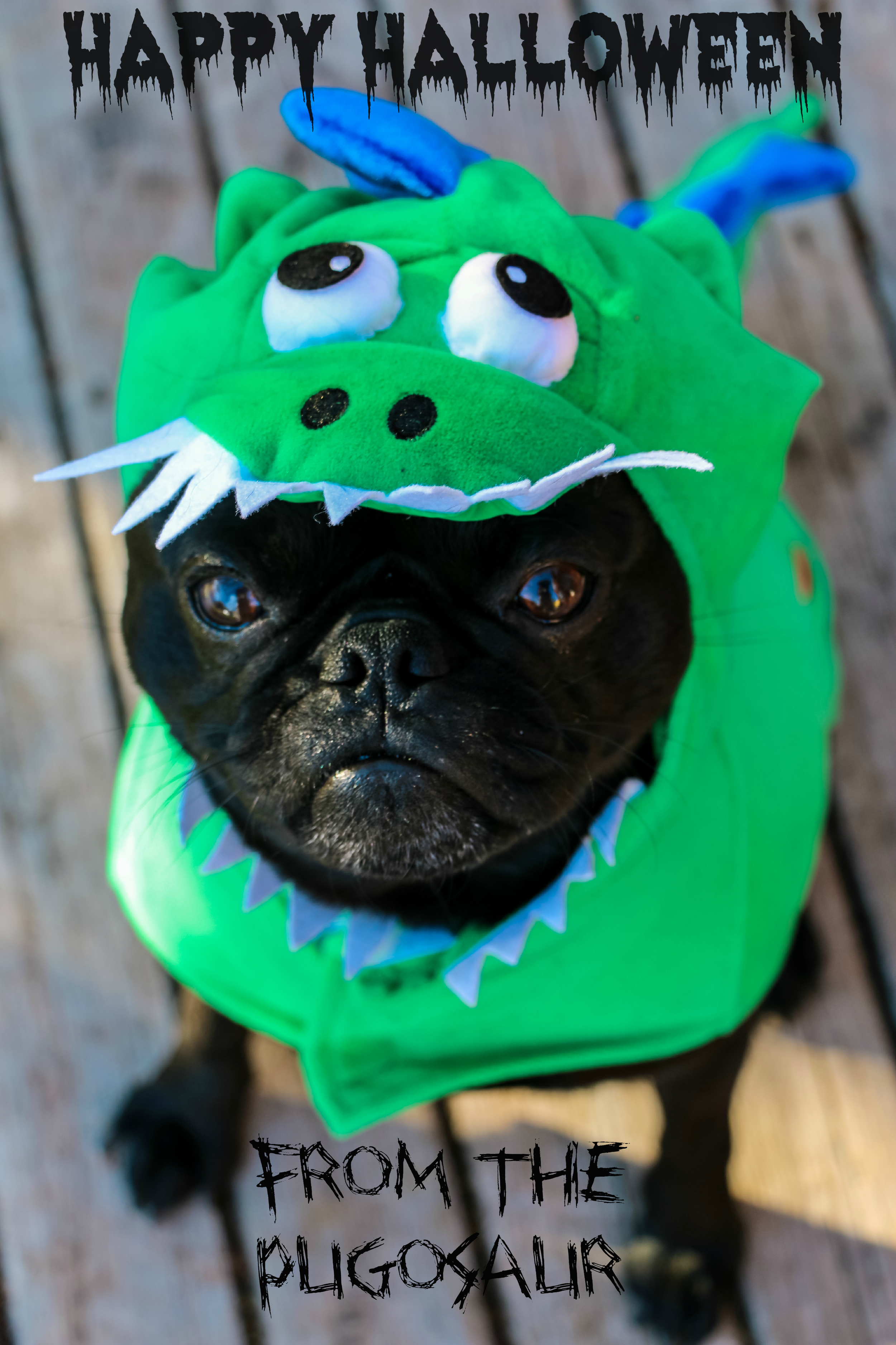 isn't he the cutest happiest looking pug EVER?!?