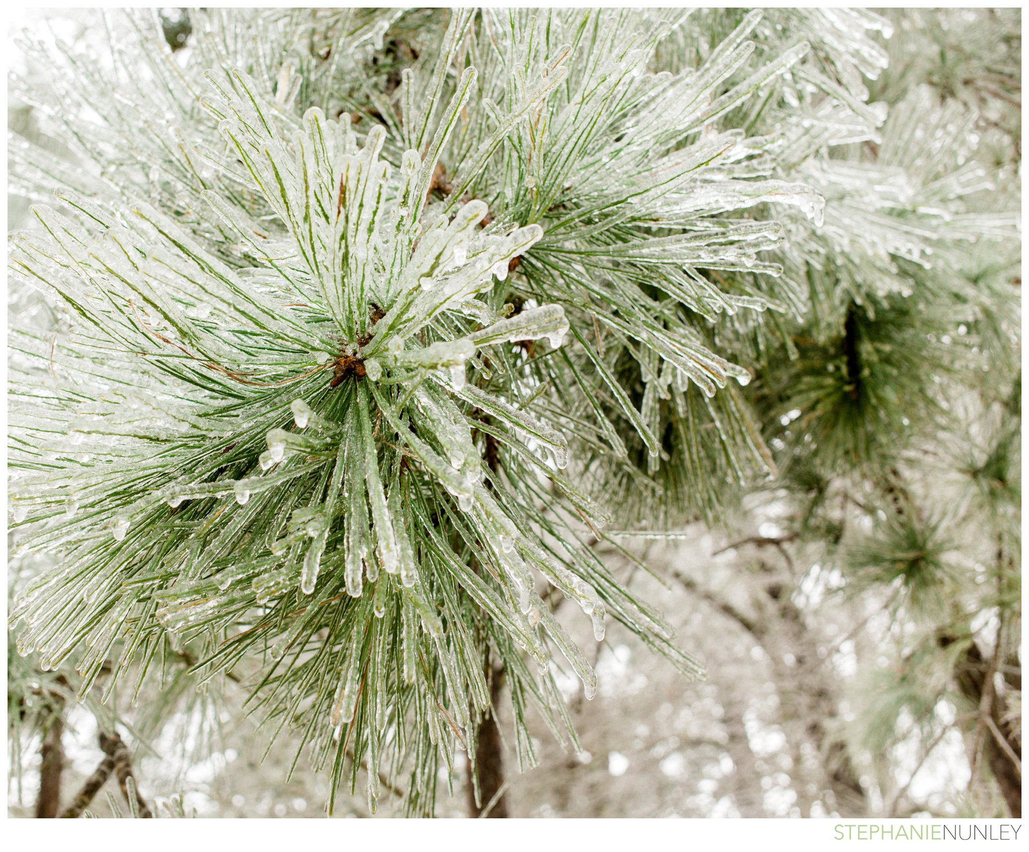 arkansas-winter-scenery-010.jpg
