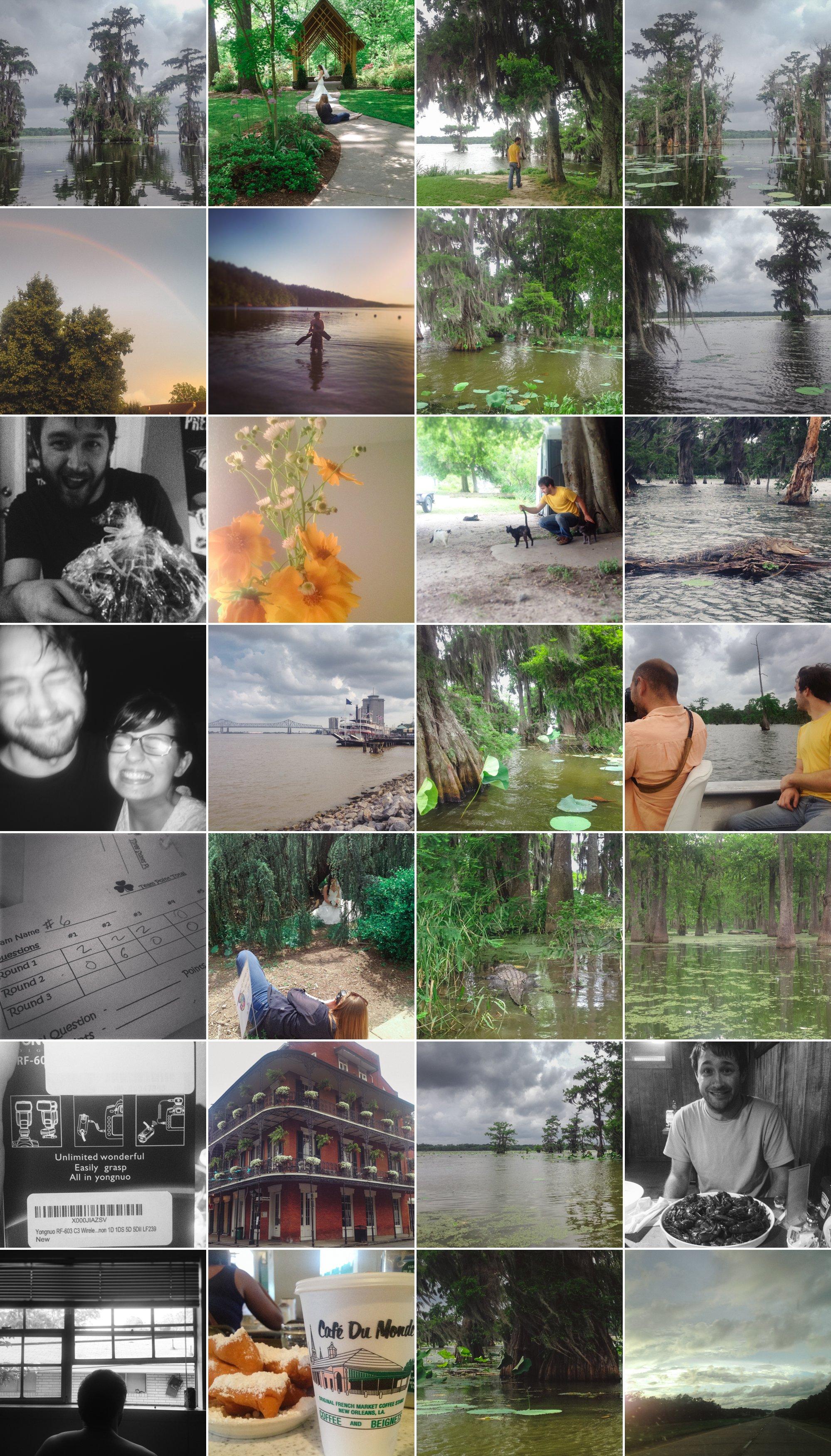 alligator-swamp-tour-025