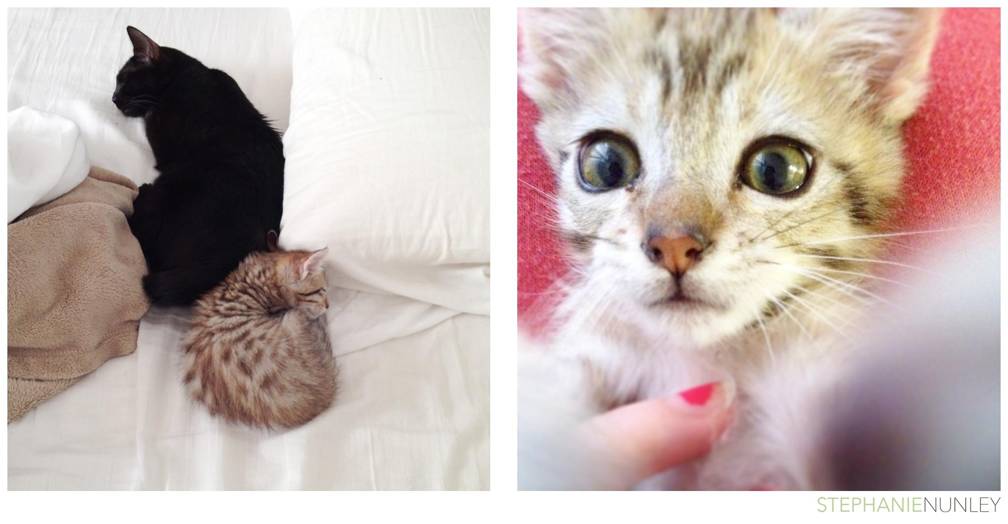 cute-baby-kitten-photos-005