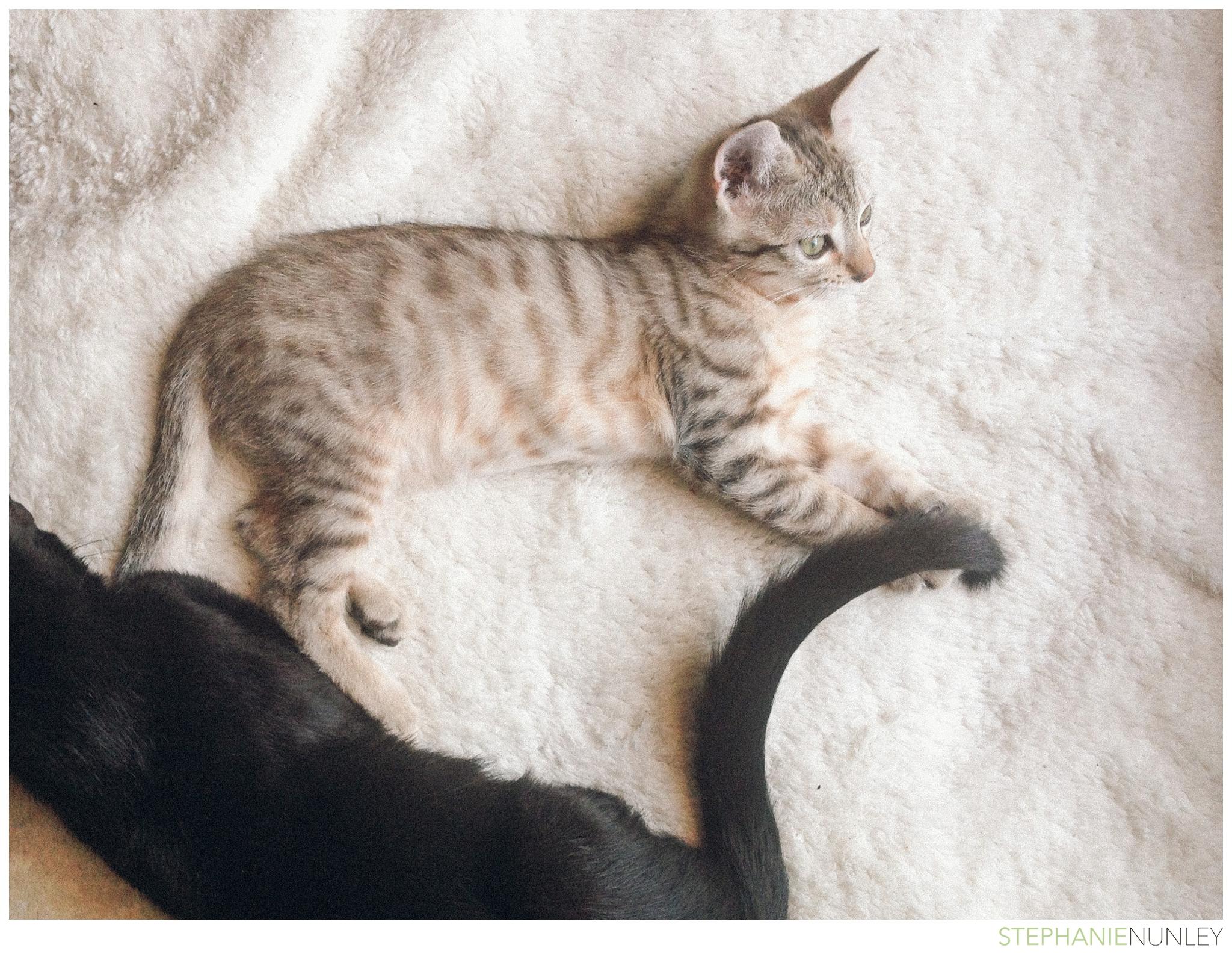 cute-baby-kitten-photos-009