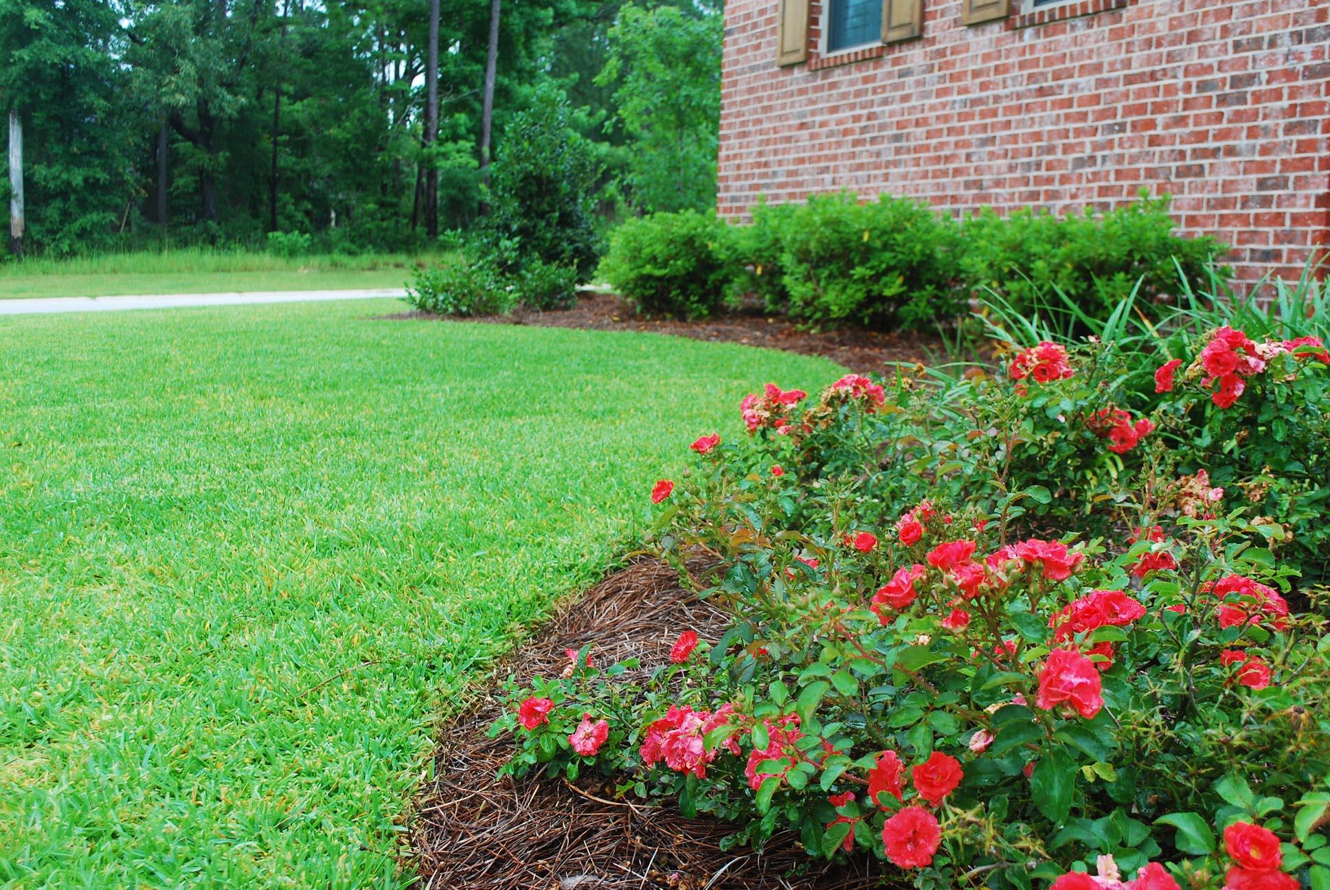 front yard detail.jpg