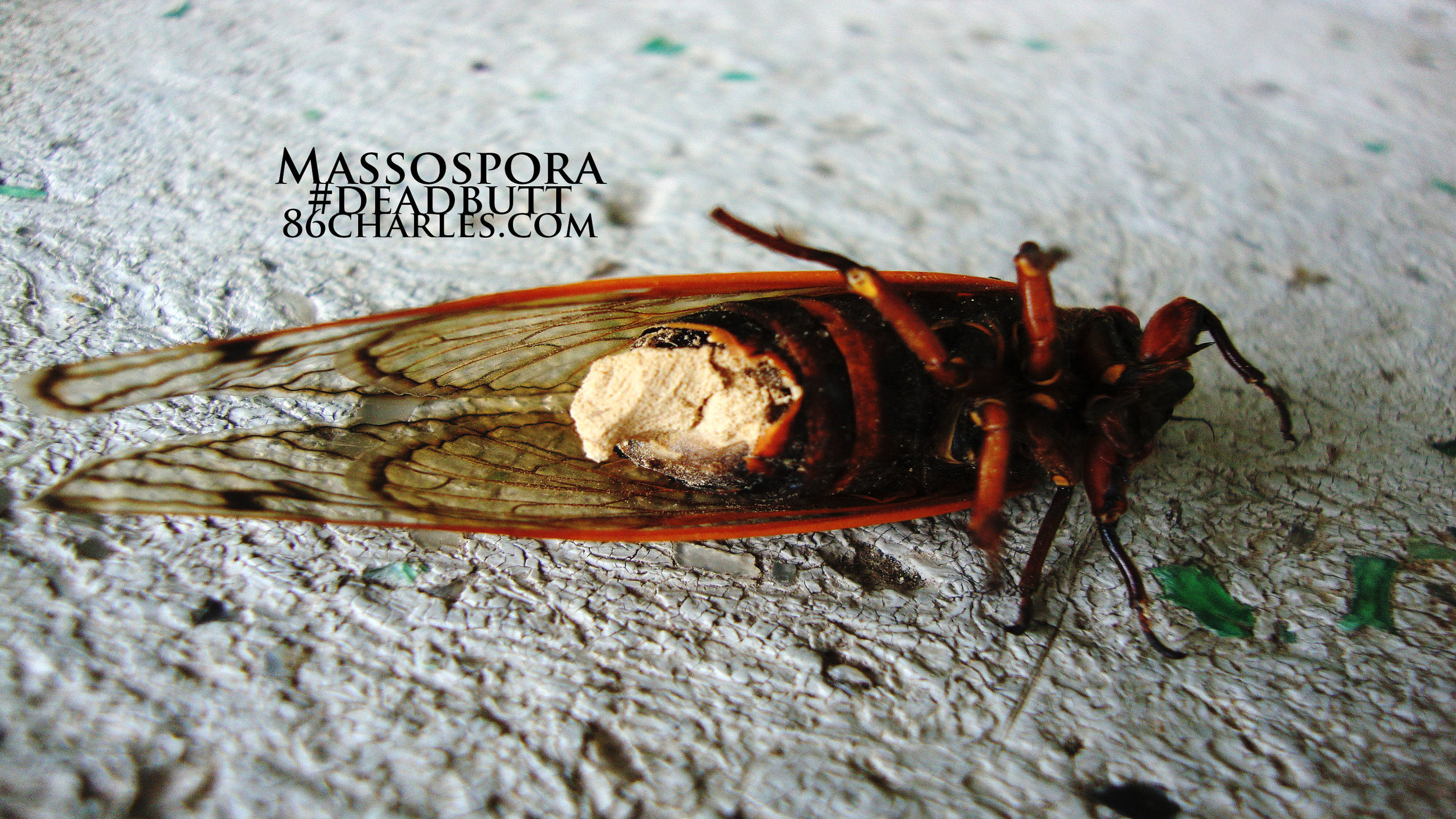 Massospora #deadbutt
