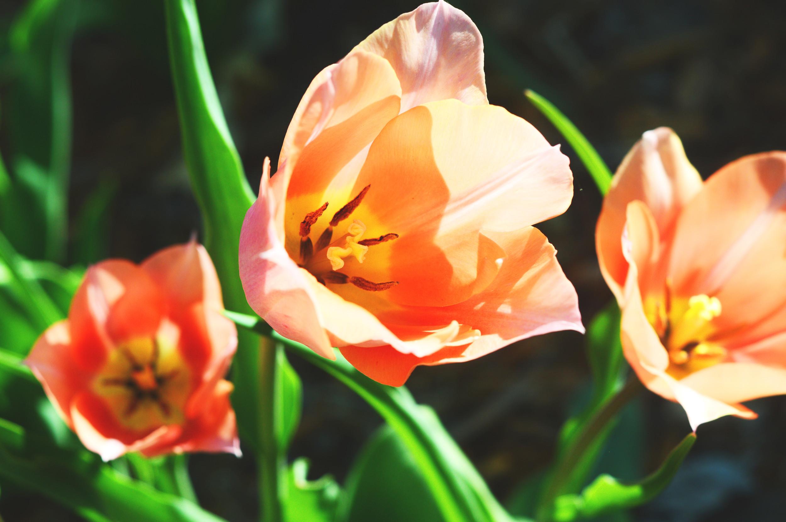 bless flower.jpg