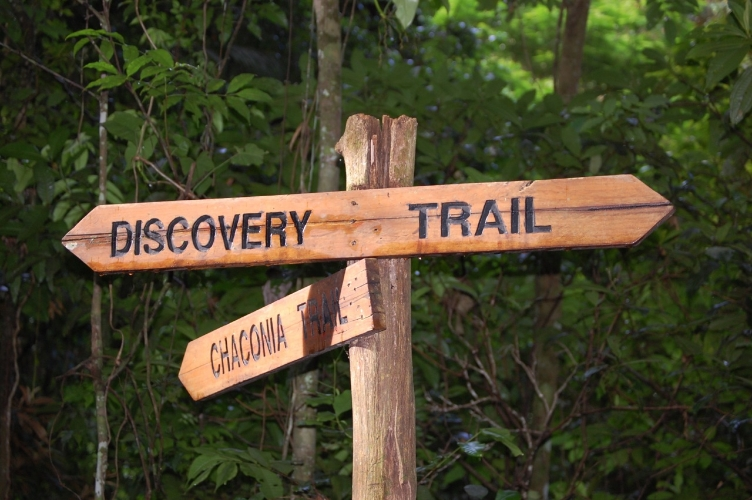 """""""Discovery Trail"""" at Asa Wright Nature Centre, Trinidad.  Photo by Natalie Wright ."""