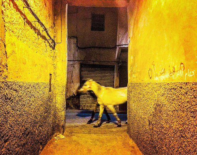 #horse #marrakech #morocco #nightlife #color