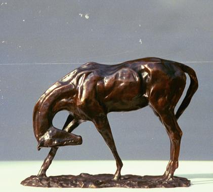Rumsey Horse Scratching.JPG