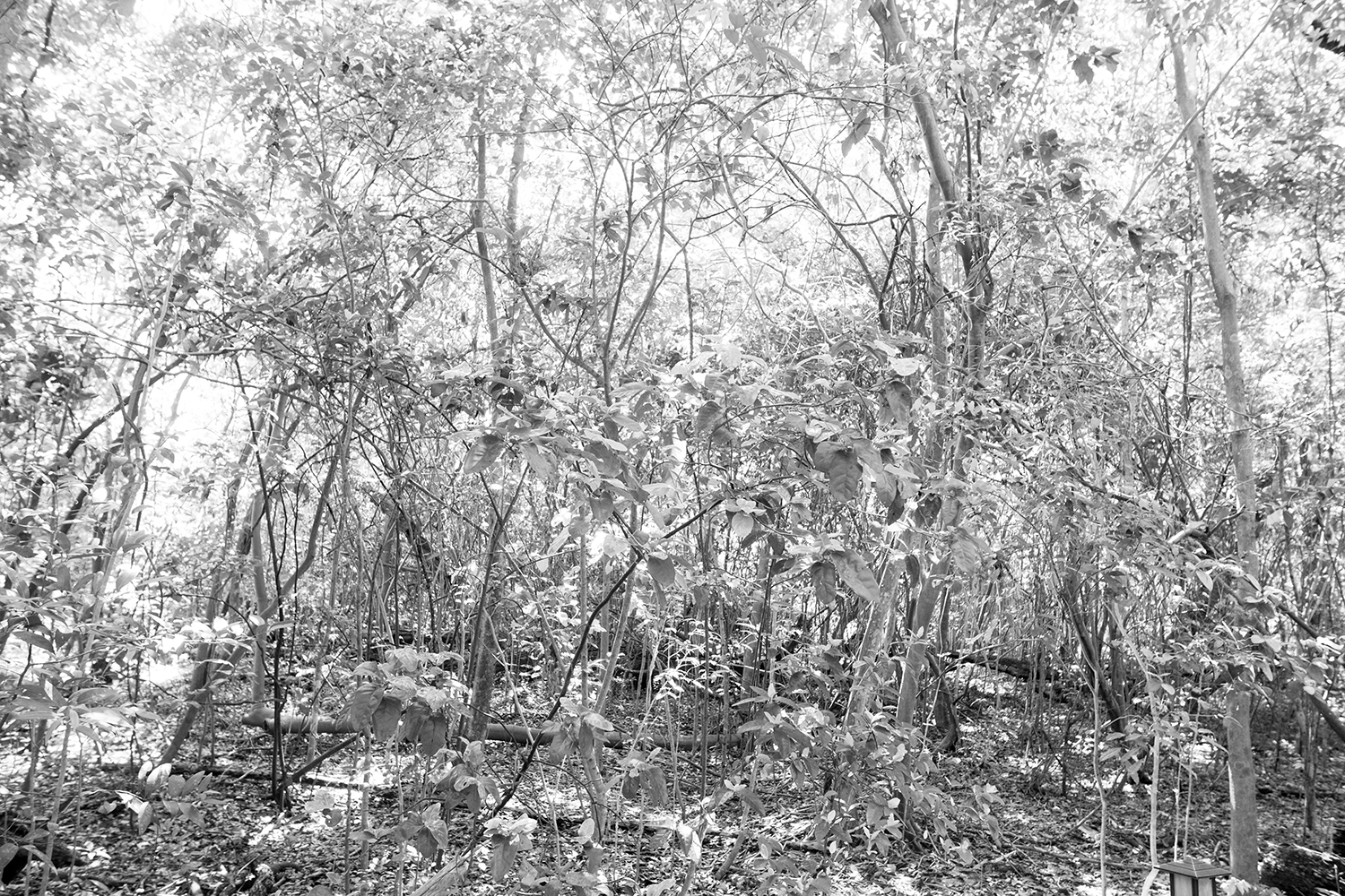 mangroves 2, 2017   ARCHIVAL PIGMENT PRINT ON COTTON RAG PAPER FRAMED DATED AND SIGNED ON VERSO  SIZES 45 X 30 INCHES 36 X 24 INCHES