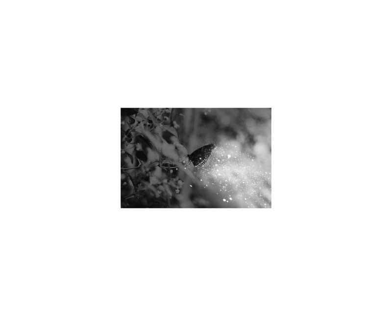 gala-wasp-expo-01.jpg