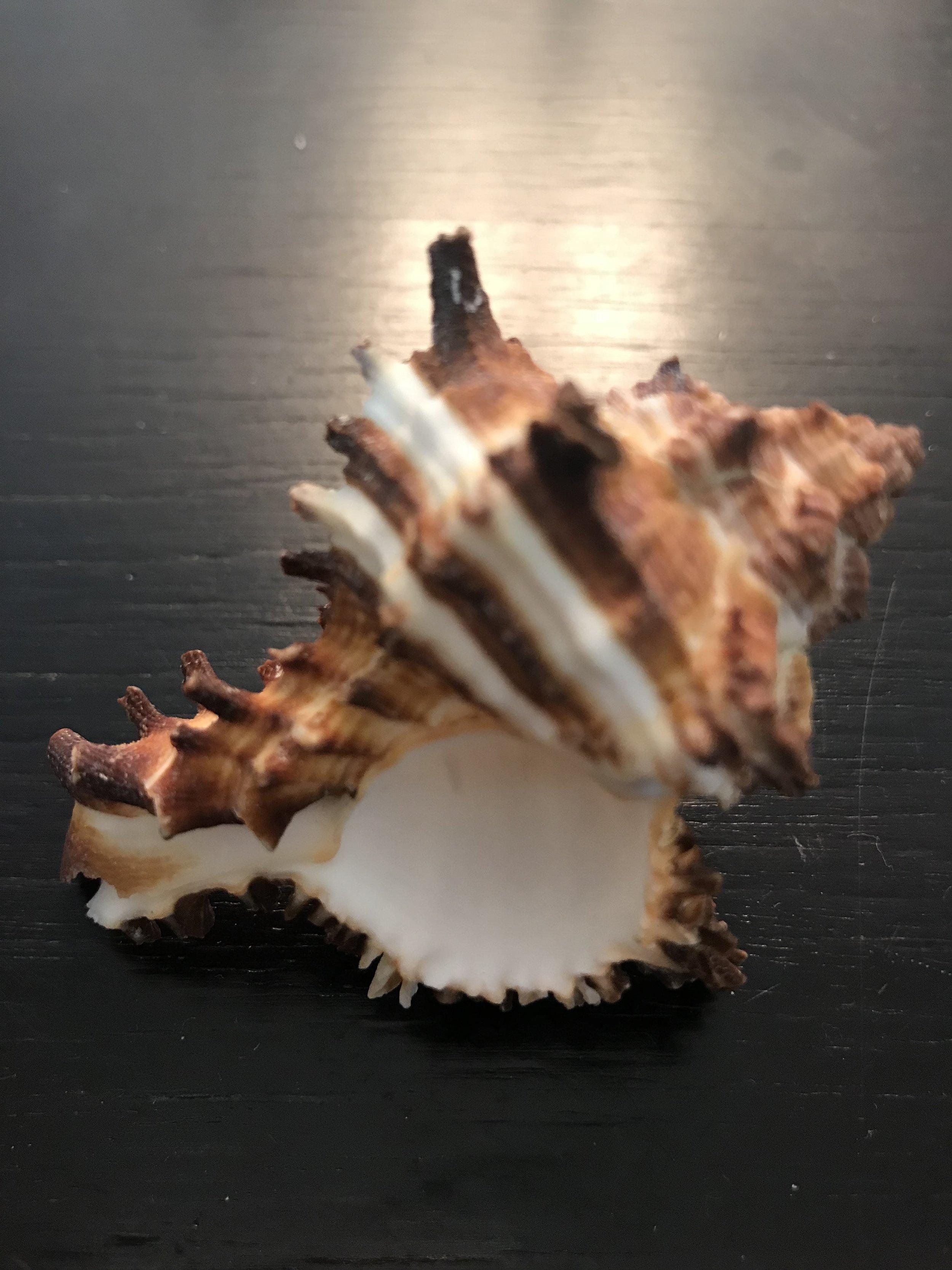 Haiku shell day 22.jpg