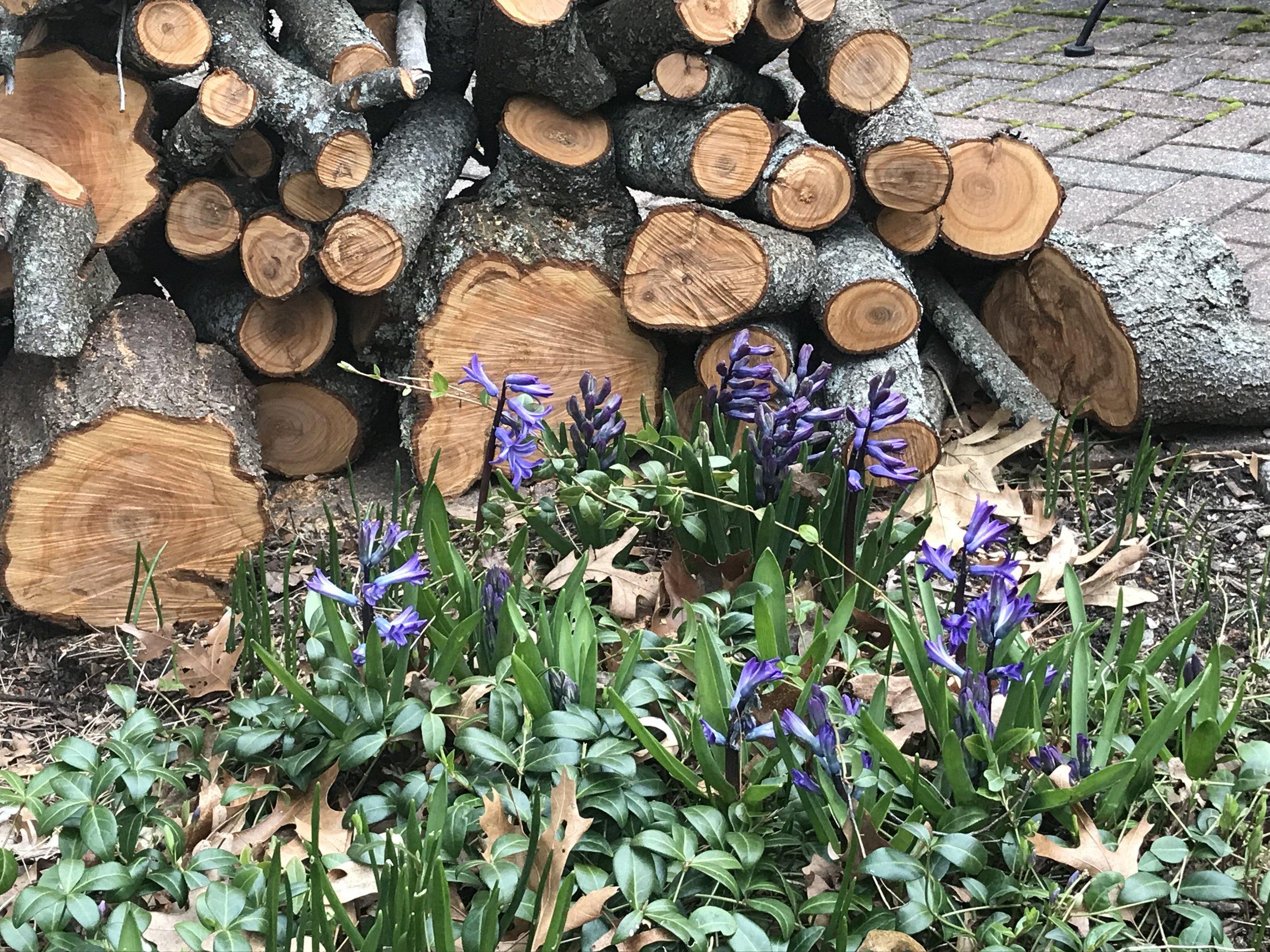 Plum tree firewood.jpg
