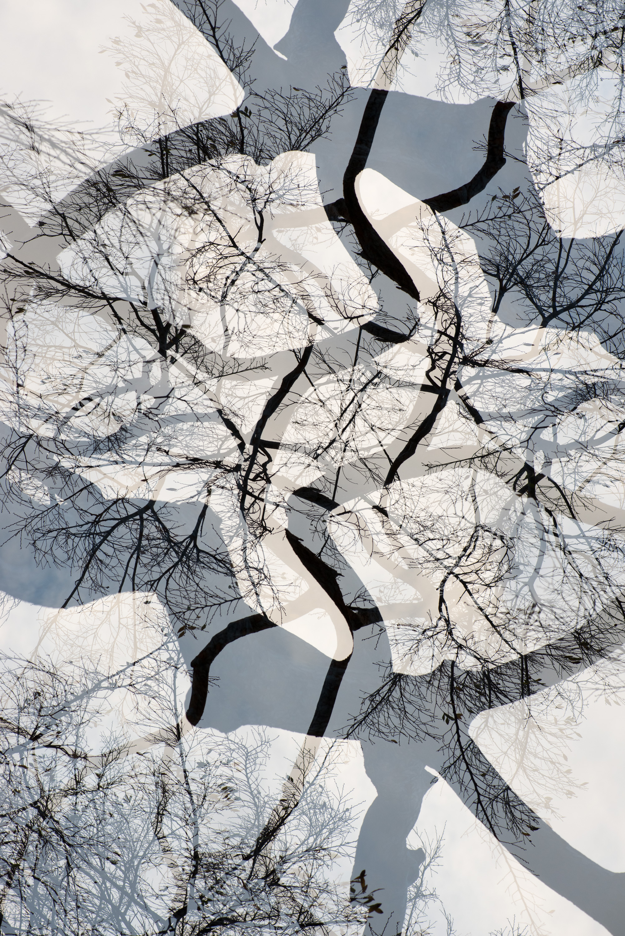 Branches , 2015 Archival Pigment Print 40 x 30 inches