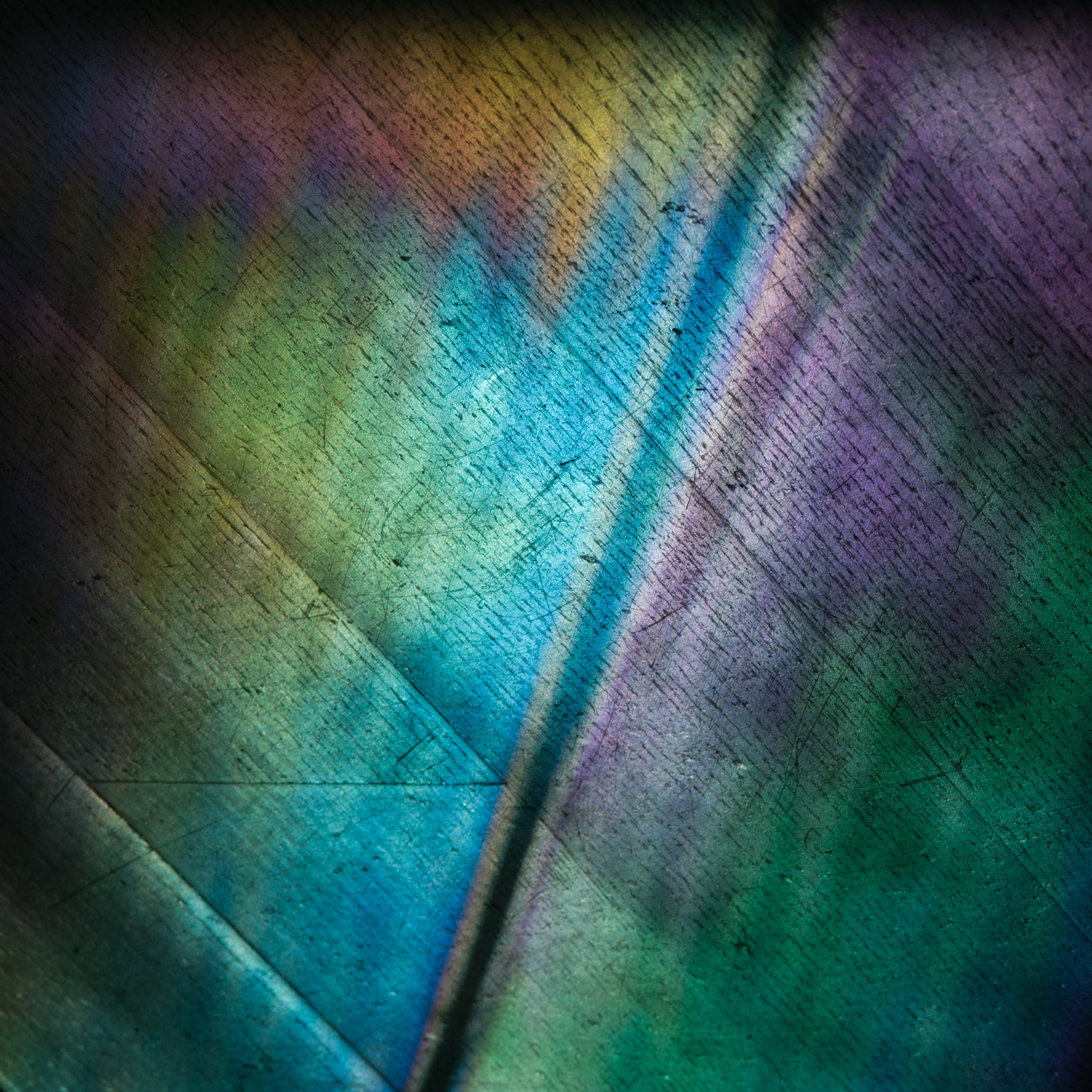 Refraction Study I, 2012 Archival pigment print 12 x 12 inches