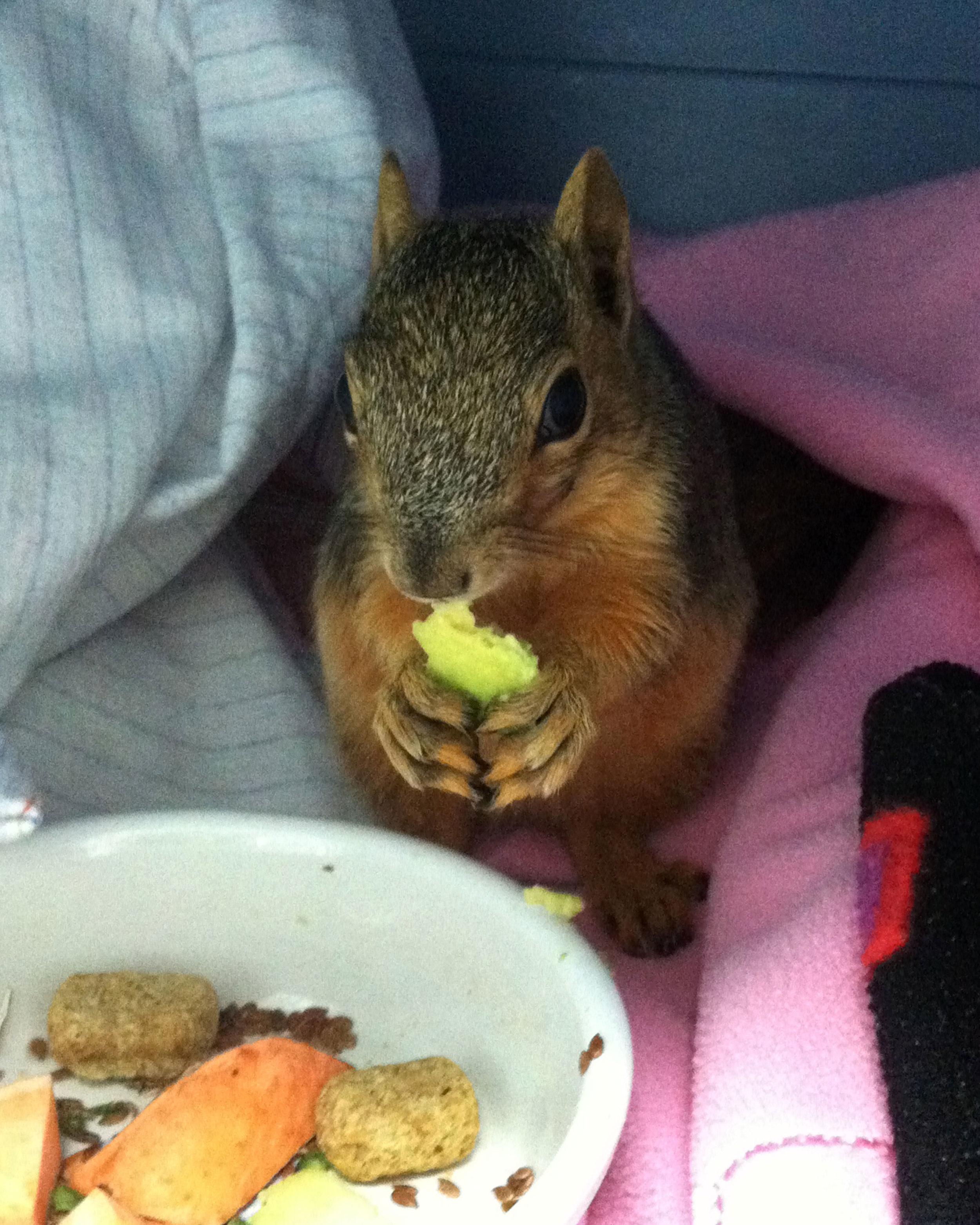 Dumpling baby squirrel